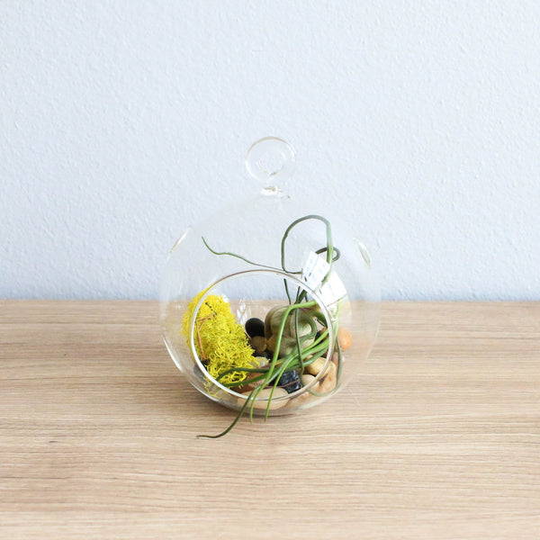 Set of 3 Stunning Hanging Glass Terrariums with Flat Bottoms