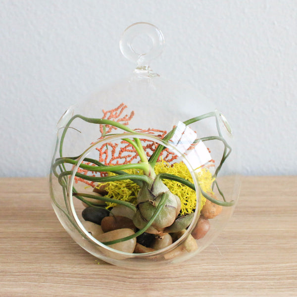 Wholesale Hanging Round Globe Terrarium with Bulbosa, Reindeer Moss, Sea Fan, & Black Stones