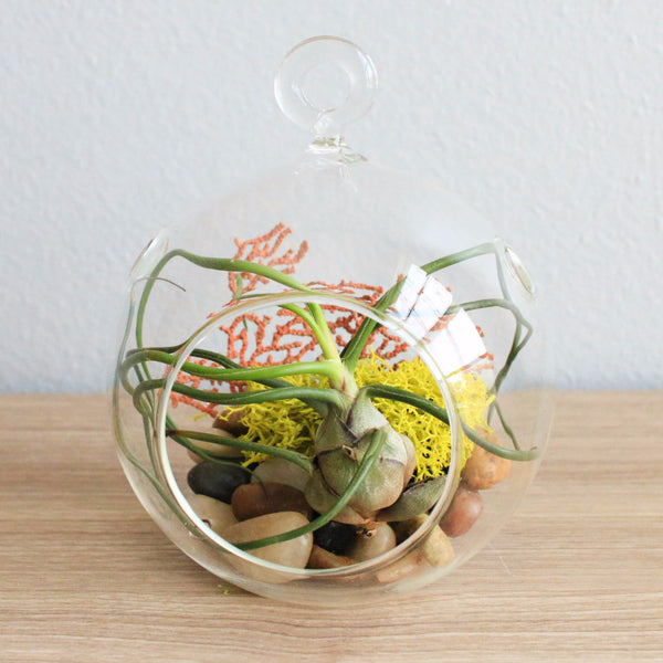 Hanging Bulbosa Guatemala Flat Bottom Globe Terrarium with Black Stones, Sea Fan, & Chartreuse Reindeer Moss