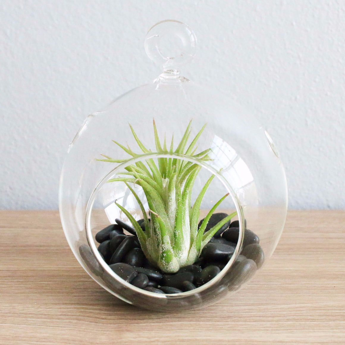 Terrarium Globe with Flat Bottom, Air Plant & Black Stones