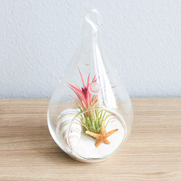 Wholesale - White Beach Terrariums with Teardrop Glass