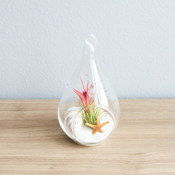 Gift Wrapped Terrarium Kit with Air Plant