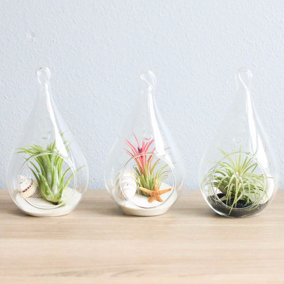Set of 3 Teardrop Beach Terrariums with Flat Bottoms