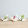 Set of 3 Beachy Globe Terrariums with Flat Bottoms