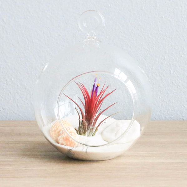 Wholesale White Beach Terrariums - Flat Bottom Globe