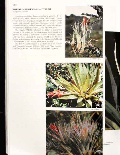 """Bromeliads"" Book By Francisco Olivia-Esteve. A Gorgeous Coffee Table Book on Air Plants & other Bromeliads - Free Shipping"