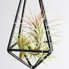 Hanging Geometric Metal Pendant with Custom Air Plants