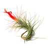 Wholesale - Tillandsia Funckiana Air Plants