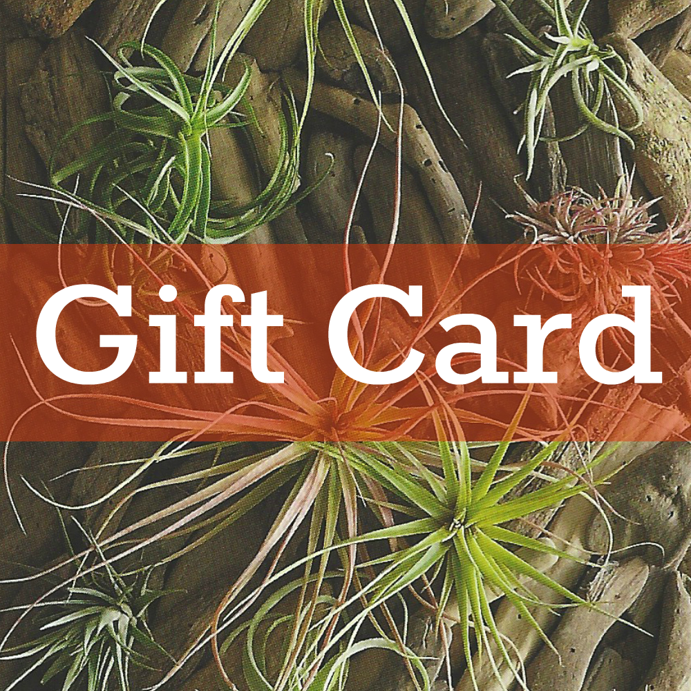 Air Plant Supply Co Gift Card