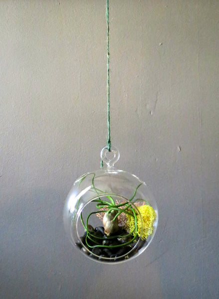 Wholesale - Hanging Round Bottom Glass Terrariums