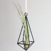 Wholesale - Hanging Geometric Metal Pendant Kit with Custom Tillandsia Air Plants