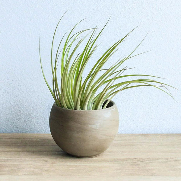 Charcoal Clay Container - Choose Your Custom Tillandsia Air Plant
