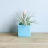 Set of 3 Geometric Containers with Custom Tillandsia Air Plants / Avocado Green + Sky Blue + Naranja Orange