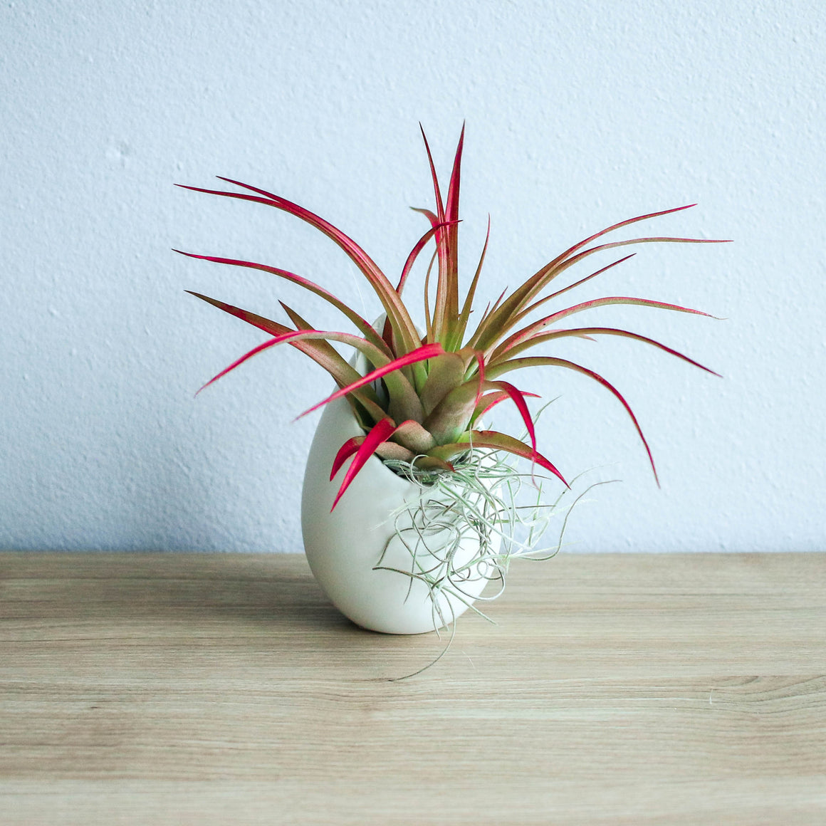 Mini Ivory Ceramic Vase with Red Abdita and Spanish Moss