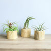 Wholesale - Modern Driftwood Container