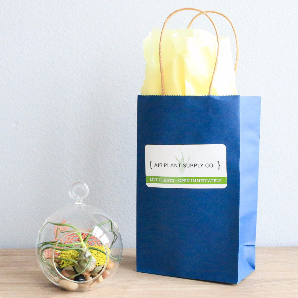 Gift Wrapped Terrarium Kits with Air Plant