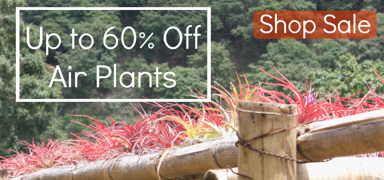 Sale Air Plants: Save Up to 60% On Tillandsia Air Plants, Gifts, Containers, and Displays