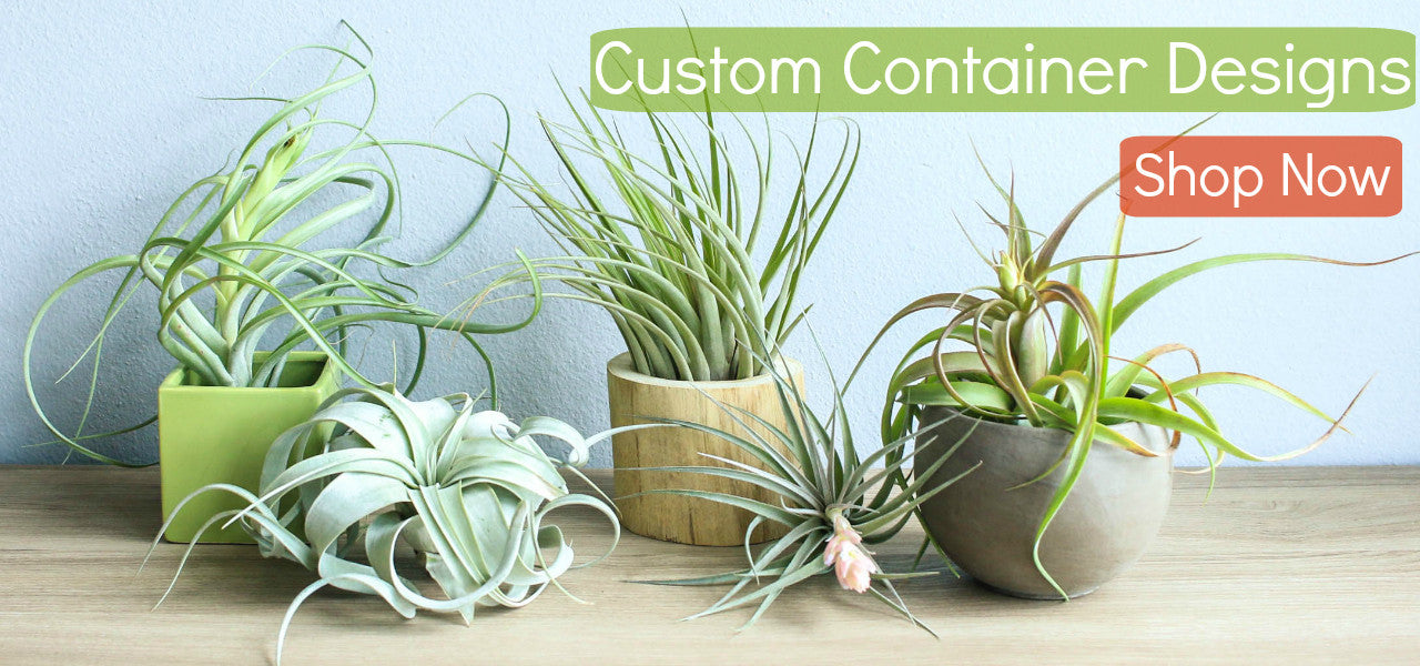 Custom Air Plant Containers