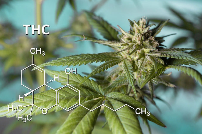 Best CBD THC Ratio for Sleep: What Is It?