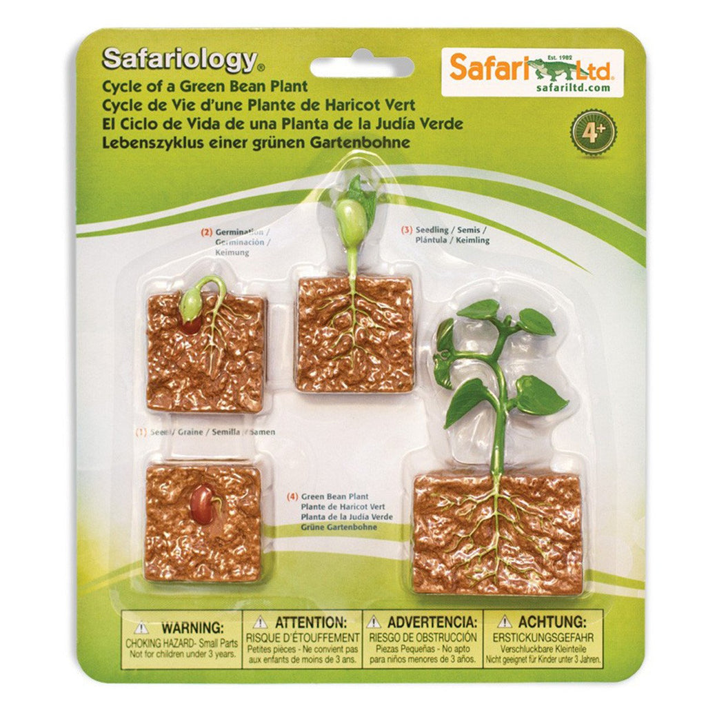 Life Cycle Of A Green Bean Plant Figures Safari Ltd - Radar Toys
