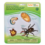 Life Cycle Of A Stag Beetle Figures Safari Ltd - Radar Toys