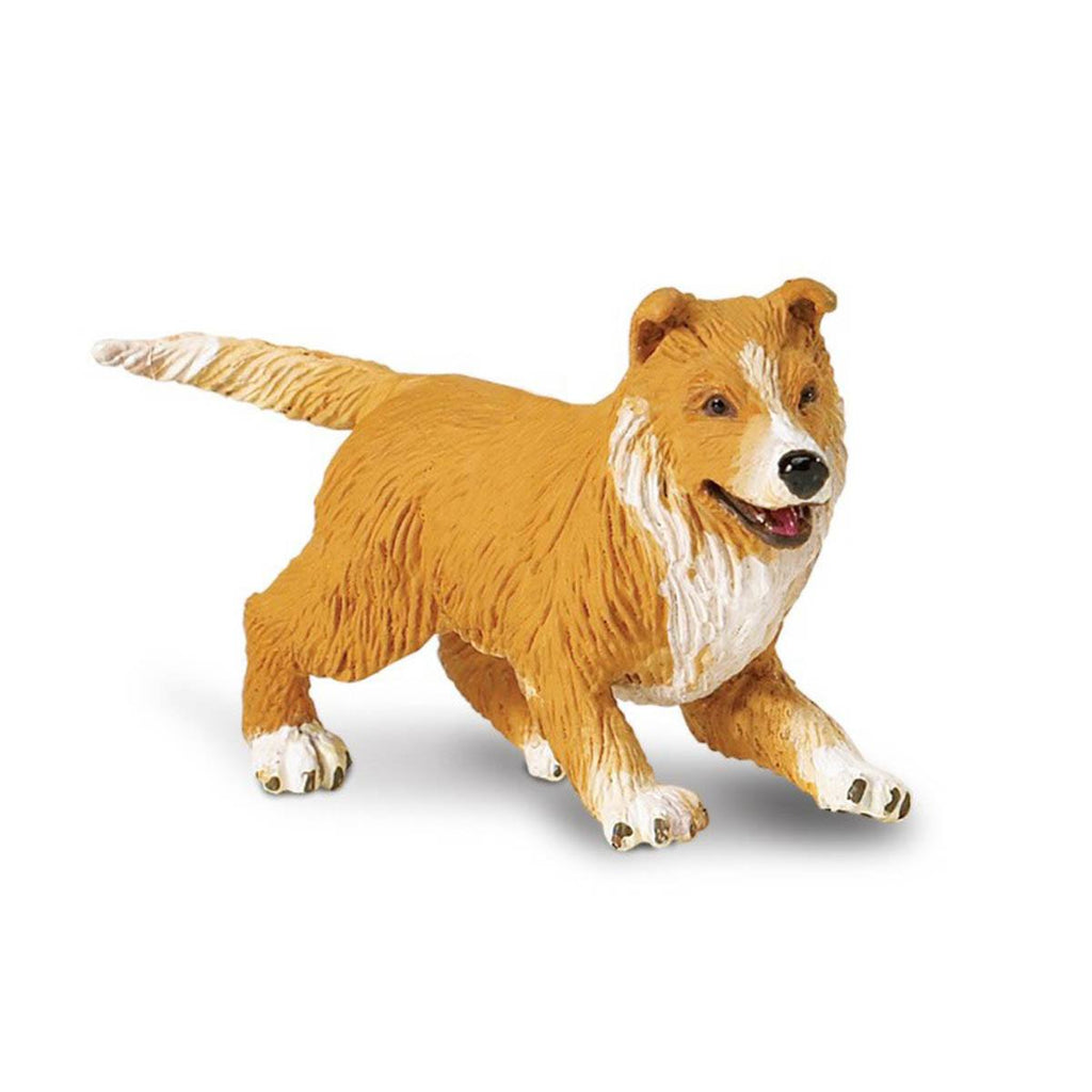 Collie Puppy Best In Show Dogs Figure Safari Ltd - Radar Toys