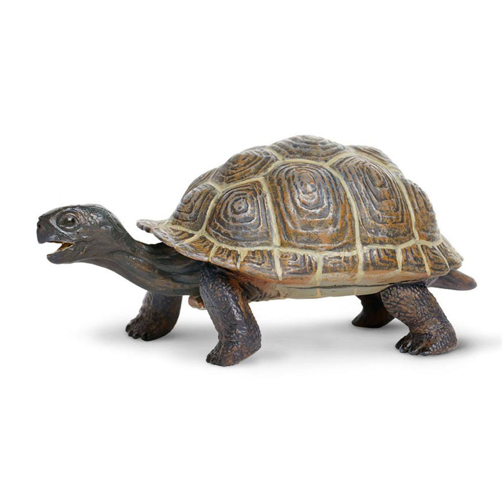Tortoise Baby Incredible Creatures Figure Safari Ltd - Radar Toys