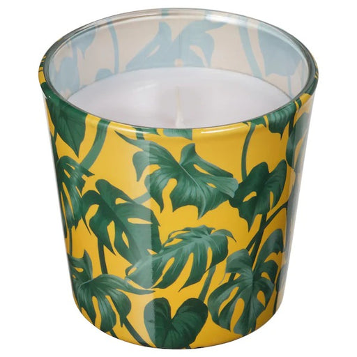 Unscented candle in glass, Monstera, leaf green, 7.5 cm exxab.com