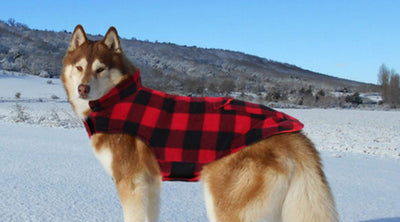 Dogs' Plaid Fashion In Winter