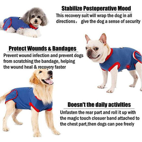 Recovery Suit For Dogs After Surgery