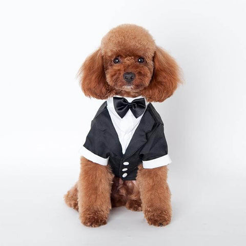 Small Dog Tuxedo Suit Costume With Black Bow Tie For Wedding