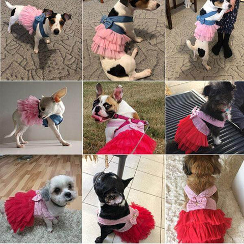 Stitching Bow Knot Dress For Pet
