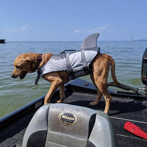dog shark life jacket quick release for swimming