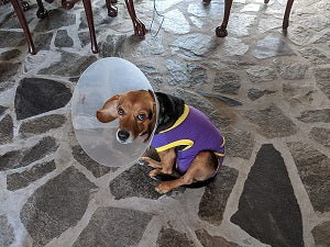 dog recovery suit x small