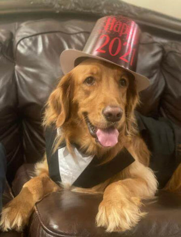 dog tuxedo with top hat