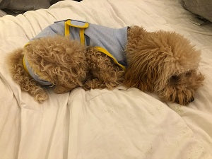 recovery dog suit