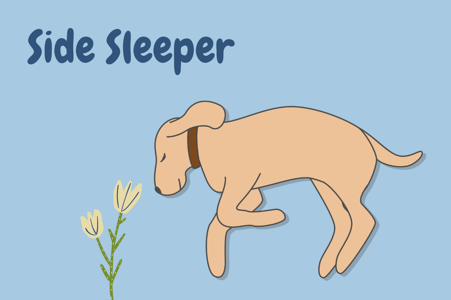 dog sleeping position side sleeper