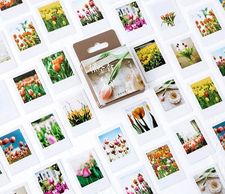 Tulip Stickers - Box of 45 - Tulip Polaroid Stickers, Polaroid Stickers, Photo Stickers, Flower Stickers, Floral Stickers, Vintage Stickers