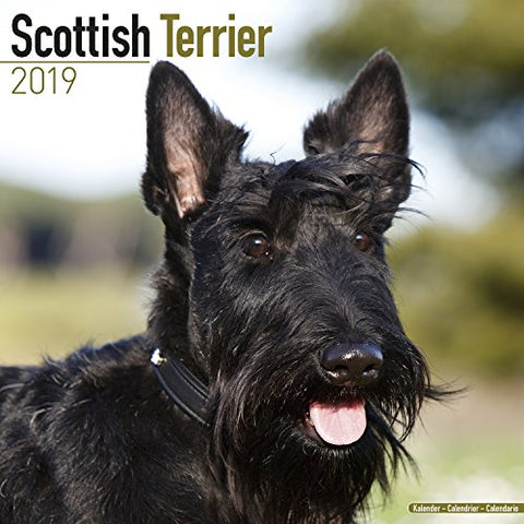 Scottish Terrier Calendar - Dog Breed Calendars - 2018 - 2019 Wall Calendars - 16 Month By Avonside