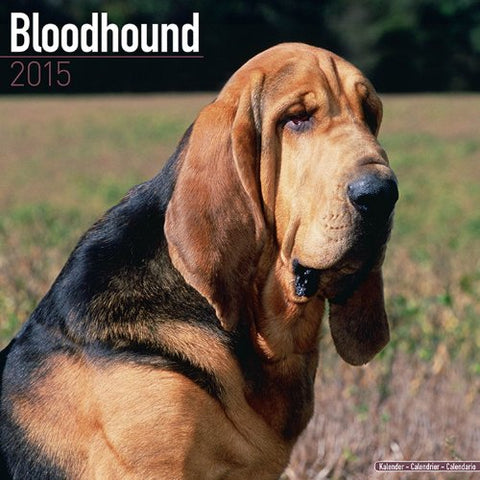 Bloodhound Calendar - Breed Specific Bloodhounds Calendar - 2015 Wall Calendars - Dog Calendars - Monthly Wall Calendar By Avonside