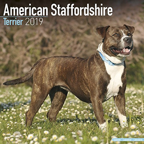 American Staffordshire Terrier Calendar - Dog Breed Calendars - 2018 - 2019 Wall Calendars - 16 Month By Avonside