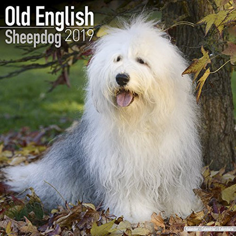 Old English Sheepdog Calendar - Dog Breed Calendars - 2018 - 2019 Wall Calendars - 16 Month By Avonside