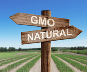 What is GMO food? What is organic food?