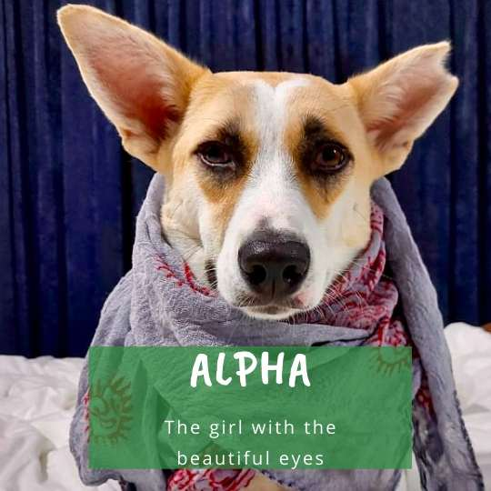 Alpha (or Alphie) the Girl with the Beautiful Eyes (and Ears)
