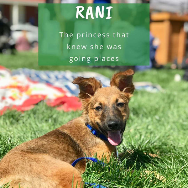 Rani: The Princess that Always Knew She was Going Places