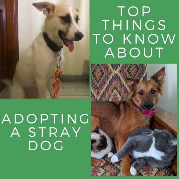 Adopting a Stray Dog For Beginners
