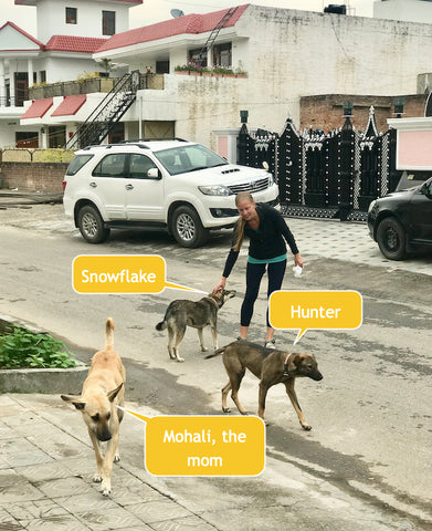 stray community dogs of India