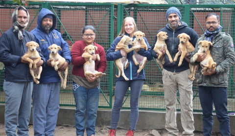 chandigarh golf club helps spay and neuter stray dogs
