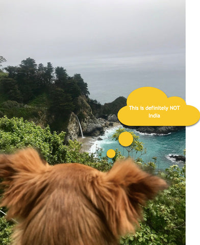 Rani the dog in Big Sur California