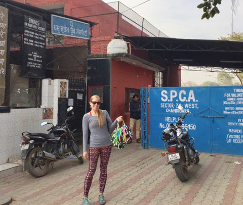 SPCA Chandigarh Animal Shelter